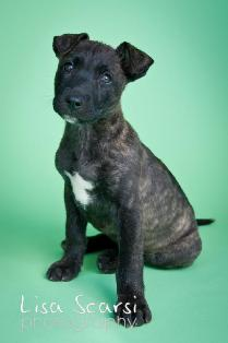 fochp org Available Dogs: Friends of Orange County's